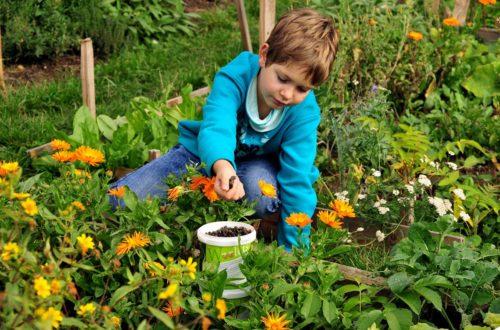 Düngen mit Schafwolllepellets ist kinderleicht ©GartenAkademie.com